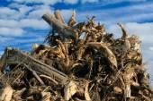 Waste wood — Stock Photo