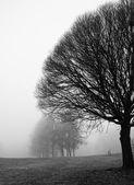 Silhuetas de árvore em um dia nebuloso em dezembro — Fotografia Stock