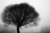 Tree silhouettes on a foggy day in december — Stock Photo