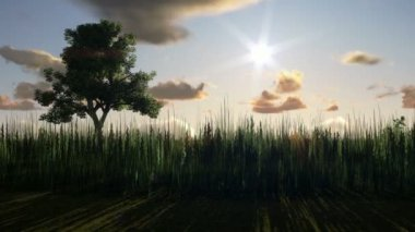 Träd på ängen vid solnedgången — Stockvideo