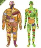 Human, thin, fat. Nutrition, food. New. Vector illustration — Stock Vector