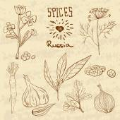 Spices in Russia. A collection of distinctive spices for the Russians. — Stock Vector