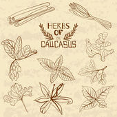 Spices Of The Caucasus. A collection of distinctive herbs and spices of the Caucasus. — Stock Vector