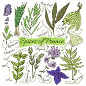 Colorful insulated set of local hand drawn herbs and spices dishes of the world on white background. The indicating arrows. Favourite France. Vector — Stock Vector