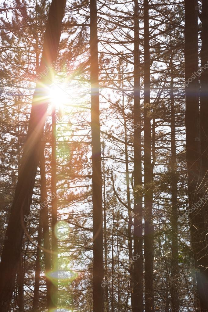 Фотообои Осенний лес деревья. природа зеленый фон древесины солнечного света.