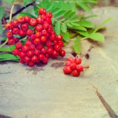 Rowan-berry — Stock Photo