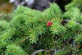 Cone vermelho — Fotografia Stock