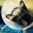 Cat injured  treated by a vet and rejuvenation. — Stock Photo #78483910