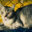 Cat injured  treated by a vet and rejuvenation. — Stock Photo #78483930