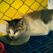 Cat injured  treated by a vet and rejuvenation. — Stock Photo #78484058