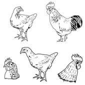 Chicken set — Stock Vector