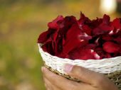 Beautiful red rose petals — Stock Photo