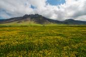 Reykjanes peninsula in summer — Stock Photo