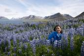 Lupins, Pingeyri town — Stock Photo
