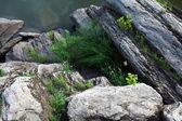 River rocks background — Stock Photo
