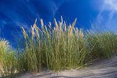 Dunes at De Haan, Belgian north sea coast against blue skyline — Stock Photo