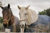 Two horses wearing winter clothes. — Stock Photo