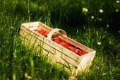 Erdbeeren im Korb auf dem grünen Rasen — Stockfoto