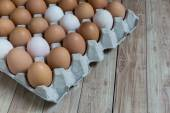 Homogeneous concept : Different kinds of eggs stay together homo — Stock Photo