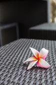 Plumeria flower on woven ratten — Stock Photo