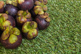 Mangosteen on Grass Background — Stock Photo