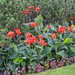 Beautiful multicolored flowerbed — Stockfoto #77184689