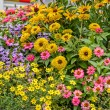 Beautiful multicolored flowerbed — Stockfoto #77184729