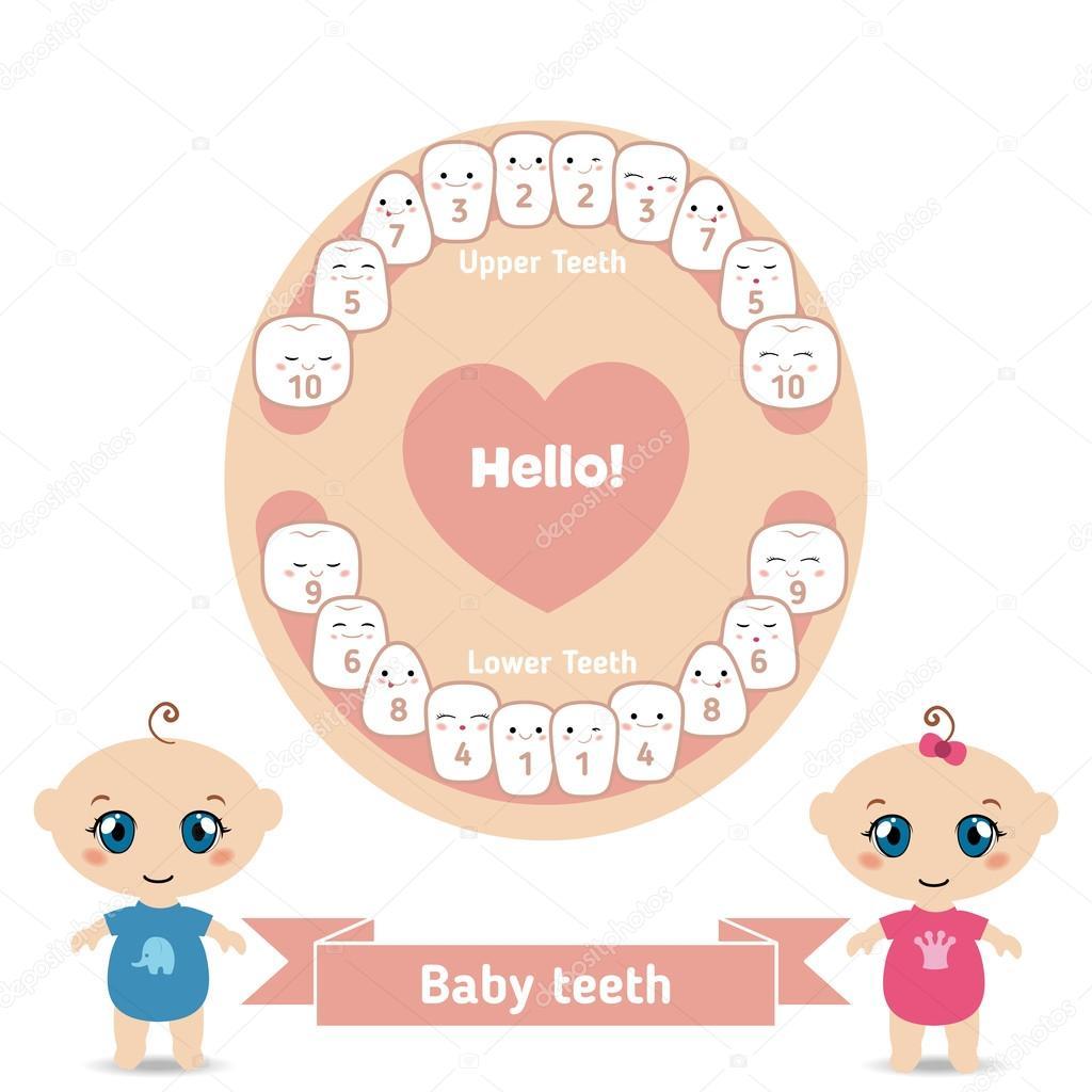 Порядок роста зубов у детей схема