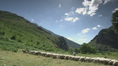 Wide angle shot of sheep in mountain pastures — Stock Video