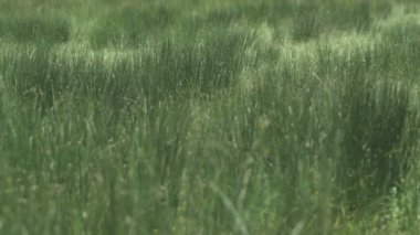 Close up of grass — Stock Video