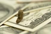 Гусеница палочник на долларах — Stock Photo
