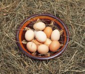 Eggs in a bowl on the hay — Stock Photo