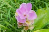 Růžové květinové — Stock fotografie