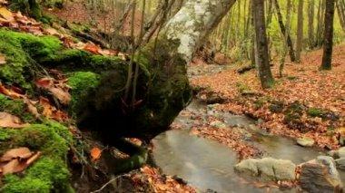 Beautiful wood — Stock Video