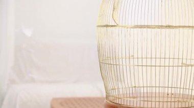 Empty golden birdcage — Stock Video