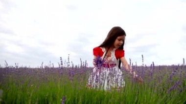 Little Girl Collects a Bunch of Lavender Flowers. — Stock Video