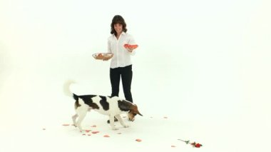 Dog Catches The Paper Hearts — Stock Video
