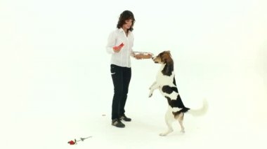 Play With A Dog On Valentines Day — Stock Video