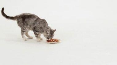 Gato tigrado cinzento come comida seca — Vídeo stock
