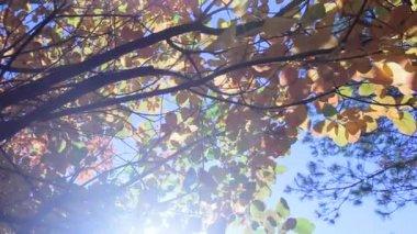 Podzimní strom — Stock video