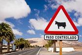 Signe de la vache sur une route de canari — Photo