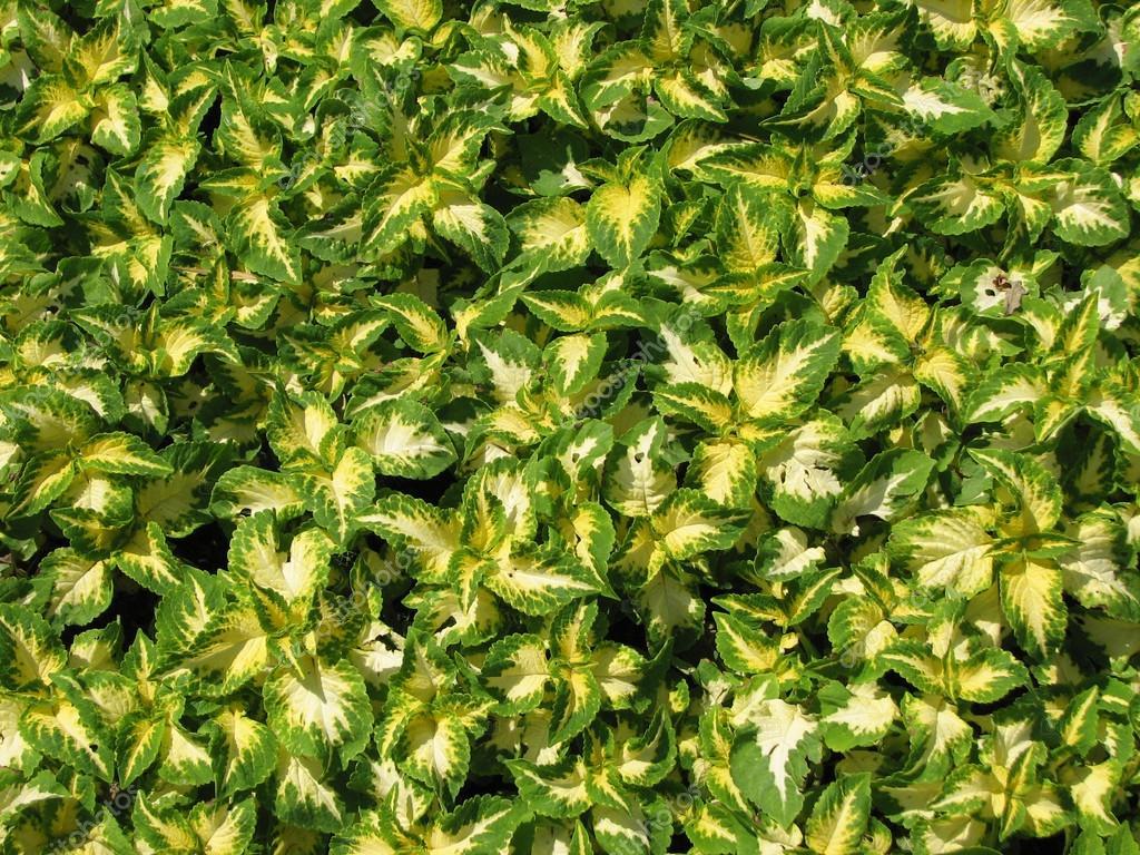 Alfombra de plantas de color verde amarillo brillantes for Alfombra verde para jardin