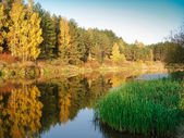 Many colors autumn forest reflected in water the river — Stock Photo