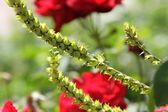 Green twigs and red flowers — 图库照片