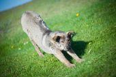 在草地上的狗 — 图库照片