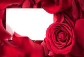 Red Rose Petals with Card — Stock Photo