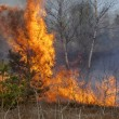 Forest fire with high flames. — Stock Photo #76910377
