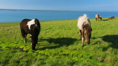 Wild horses on rural pasture land — Stock Video