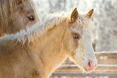 Porträt eines jungen Fohlen — Stockfoto