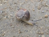 Close-up of a snail — Stock Photo